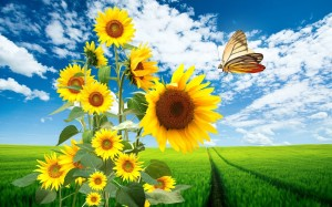 sunflower-and-butterfly-in-blue-sky_087082